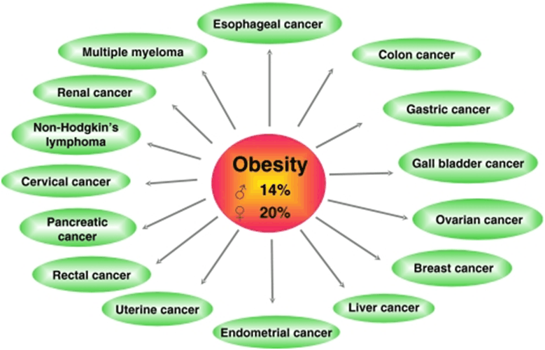 Studies Reveal Obesity Linked to Dozens Of Cancers